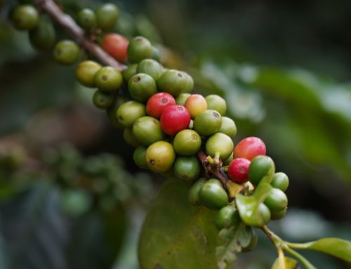 LABEL BIO ET ÉQUITABLE : la garantie d'un meilleur café ?