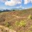 Plantation de café Honduras